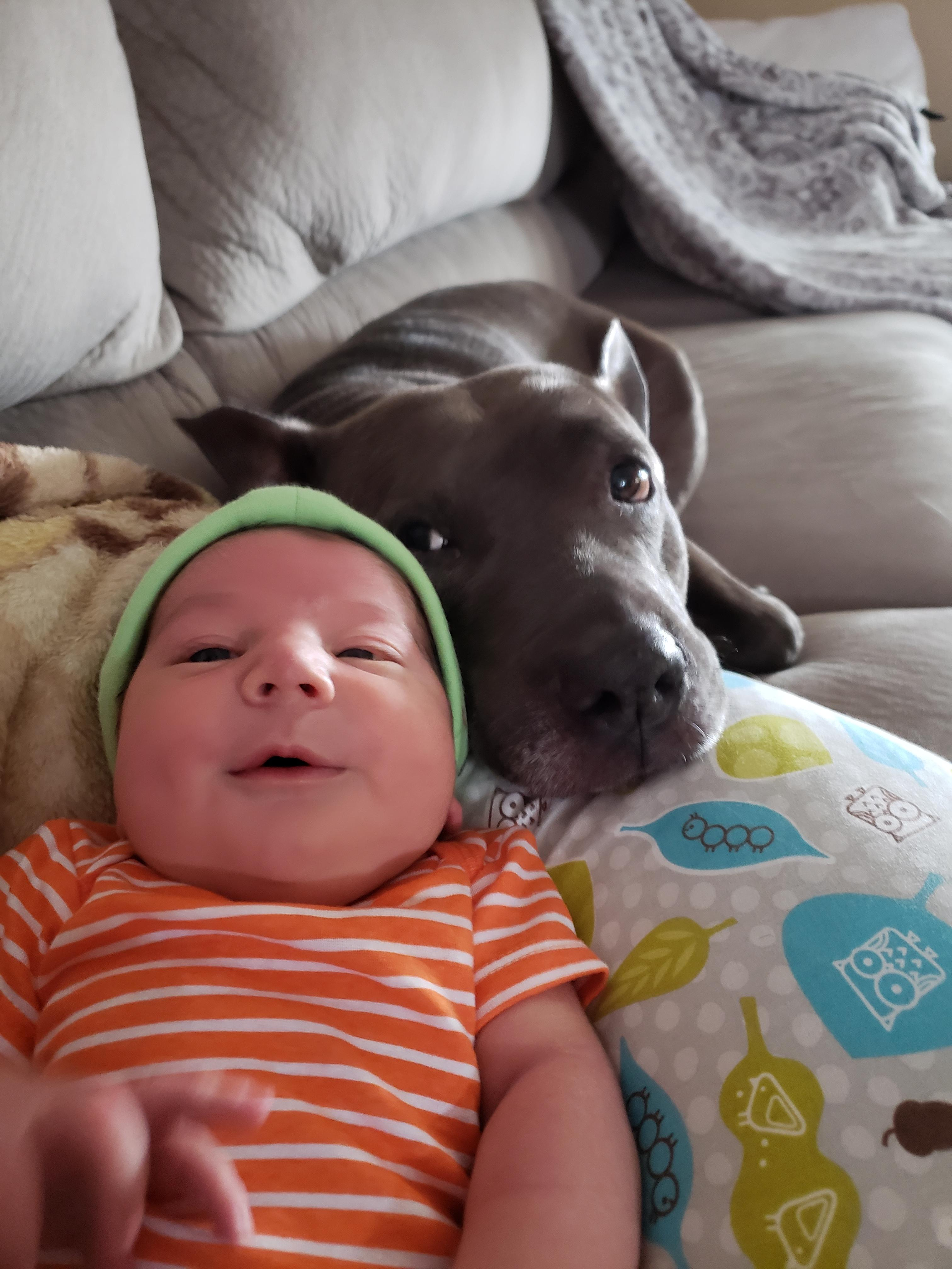 Newborn Baby Pitbulls : newborn, pitbulls, Pitbull, Newborn, Sight., Girl!