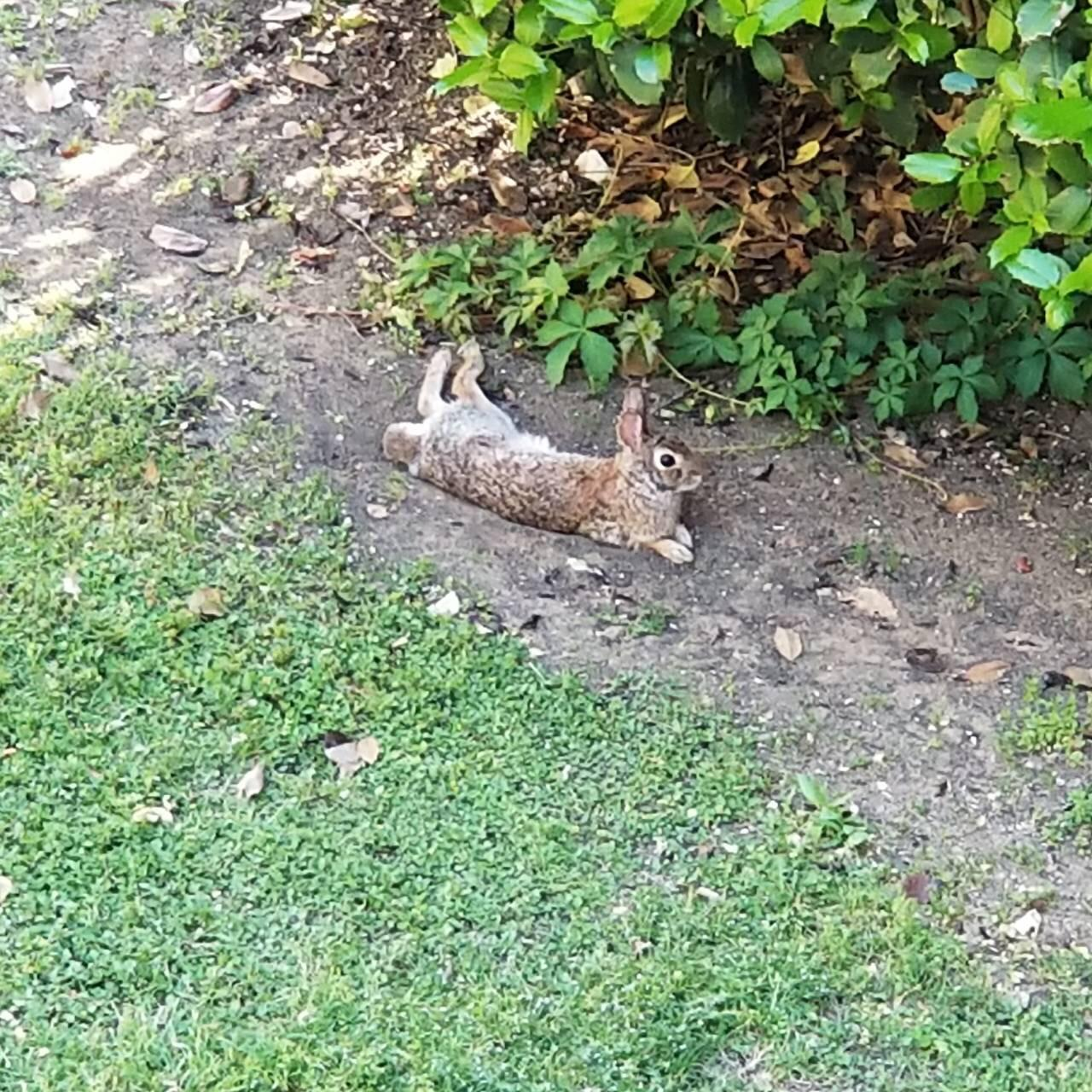Rabbits At My Friend S Apt Are So Relaxed Always Binkying