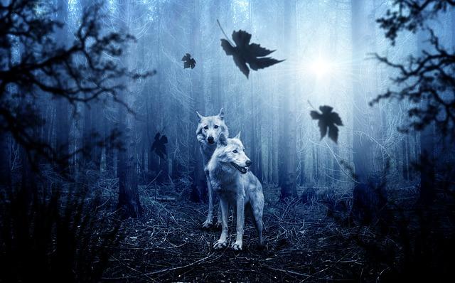 Animal Totem et Animal de Pouvoir Wolf-210