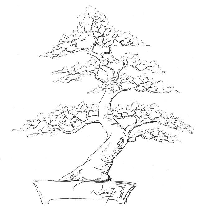 wiring larch bonsai