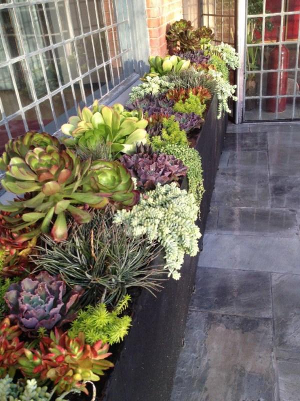 indoor and outdoor succulent