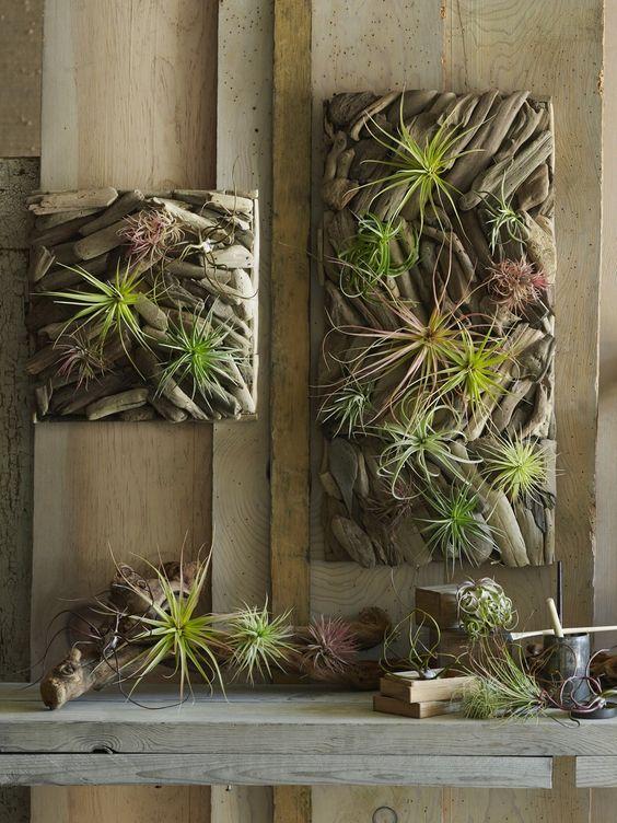 Inside Hanging Plants