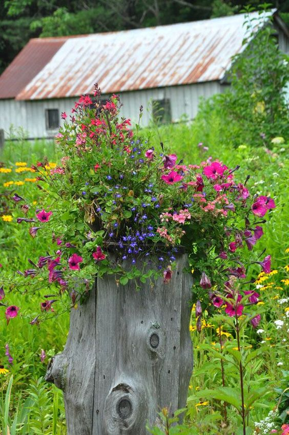 eye-catchy flower bed ideas