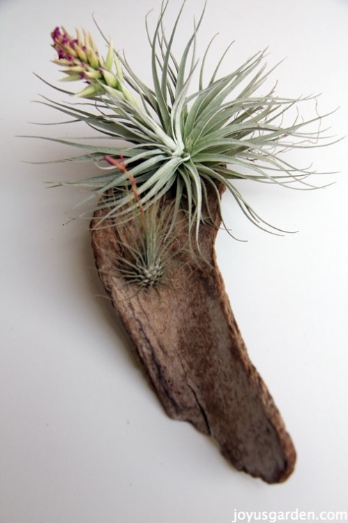 14 Creative DIY Air Plant Dcor Ideas  Shelterness