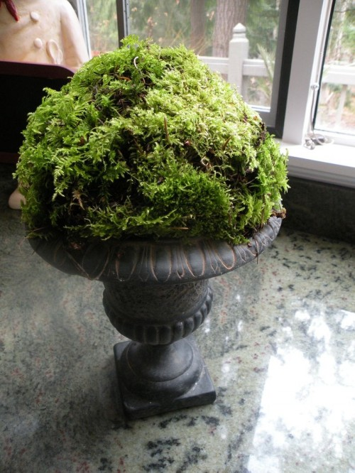 25 Cool Ideas To Decorate Your Home With Moss Shelterness