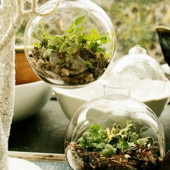 Living Room Decor With Plants Modern Ideas For Hdb 9 Diy Christmas Terrariums And Not Only ...
