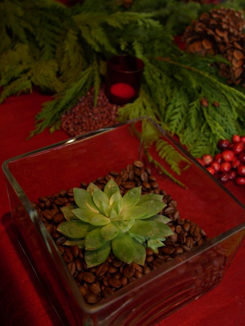 7 DIY Succulent Centerpieces That Are Cheap And Easy To