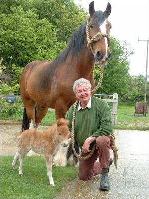 Le Plus Petit Cheval Du Monde : petit, cheval, monde, Grand, Côté, Petit, Races, D'équidés