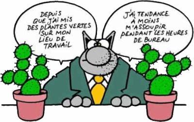 Philippe Geluck Le Chat Le Blabla Du Tout Et Du