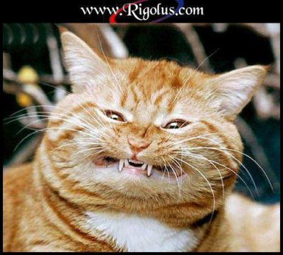 Chat Marrant IMAGEPOURBLOGG