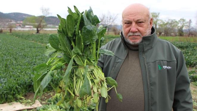 Çiftçi isyan etti: Benim ıspanağımı da satın alıp halka dağıtsınlar
