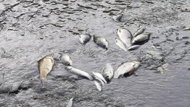 Bursa'da balık ölümleri tedirginlik yarattı