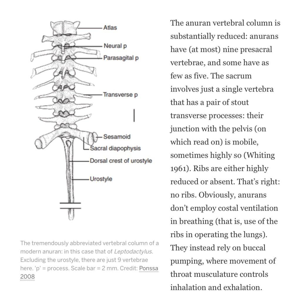 medium resolution of  frog spine diagram