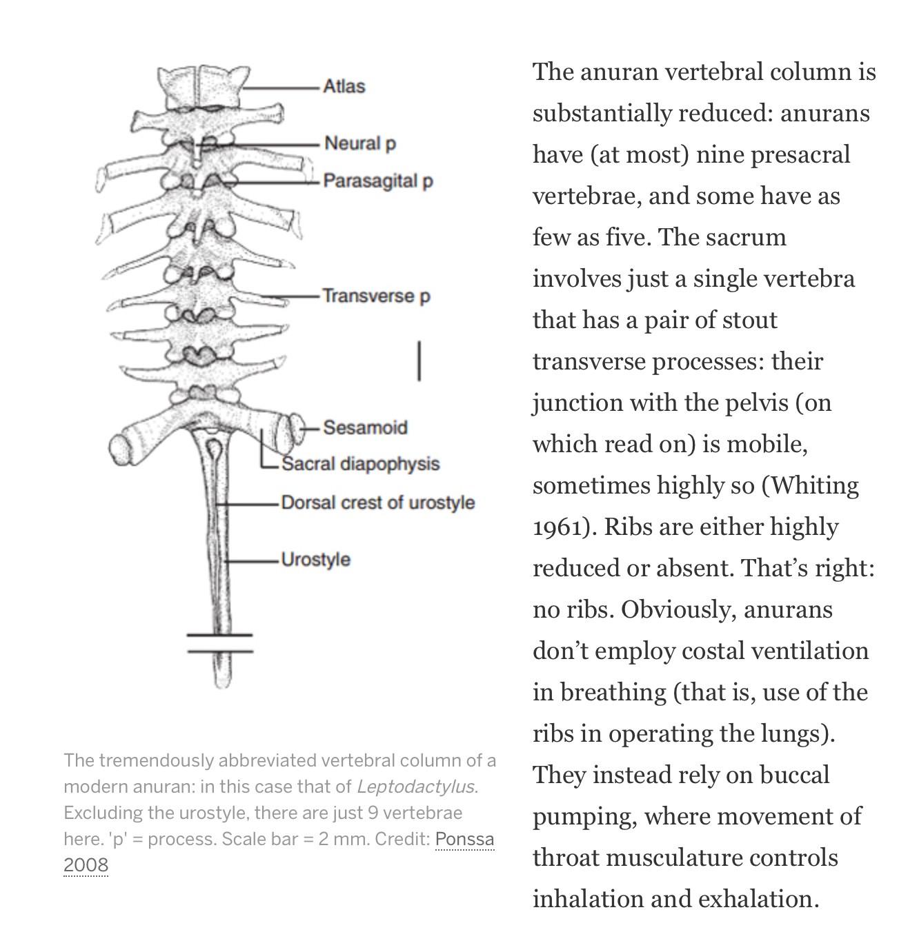 hight resolution of  frog spine diagram