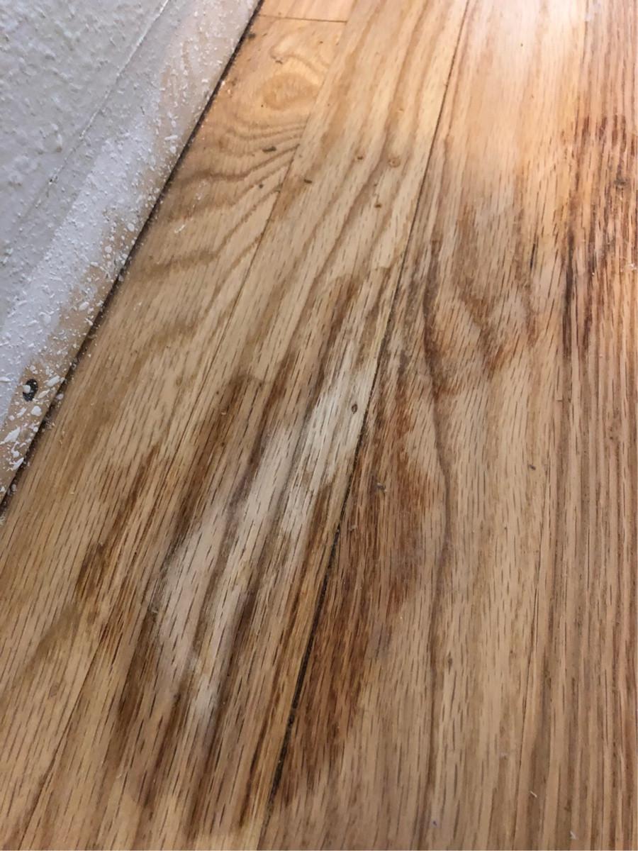 flooring  Spot repair hardwood floor due to Goo Gone