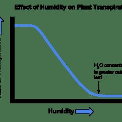 Flower Transpiration Diagram Photocell Sensor Circuit Biochemistry Effect Of On Plant Growth