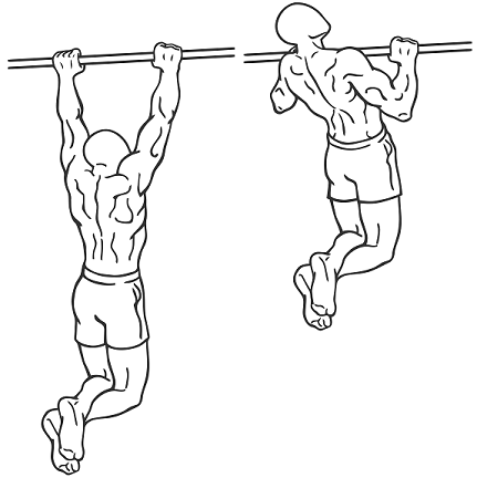 pull up muscles worked diagram sankey generator newtonian mechanics when we do ups does the bar takes more