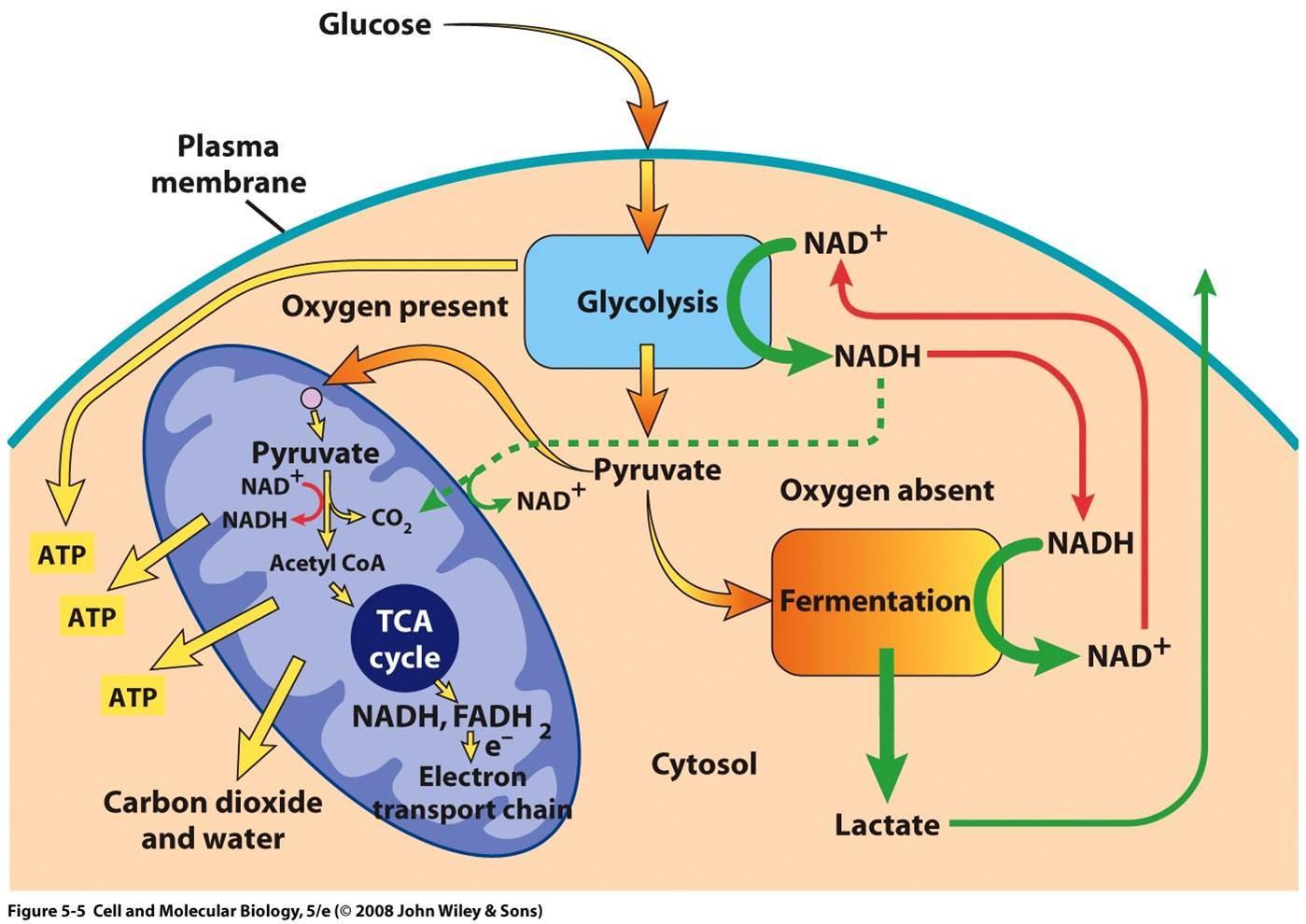hight resolution of respiration