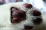 cats - kitten