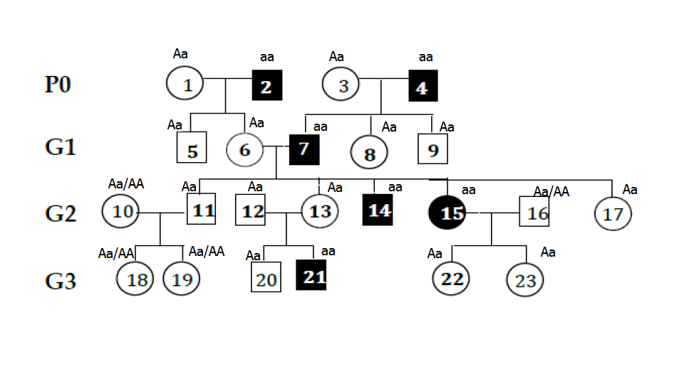 How to tell if pedigree is autosomal or linked