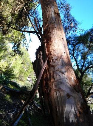 Tree Burrow