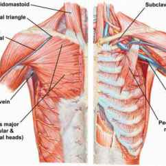 Diagram Of Rib Cage And Muscles Directv Swm Not Detected 775 Musculoskeletal System Why Do Broken Ribs Lead To More Enter Image Description Here