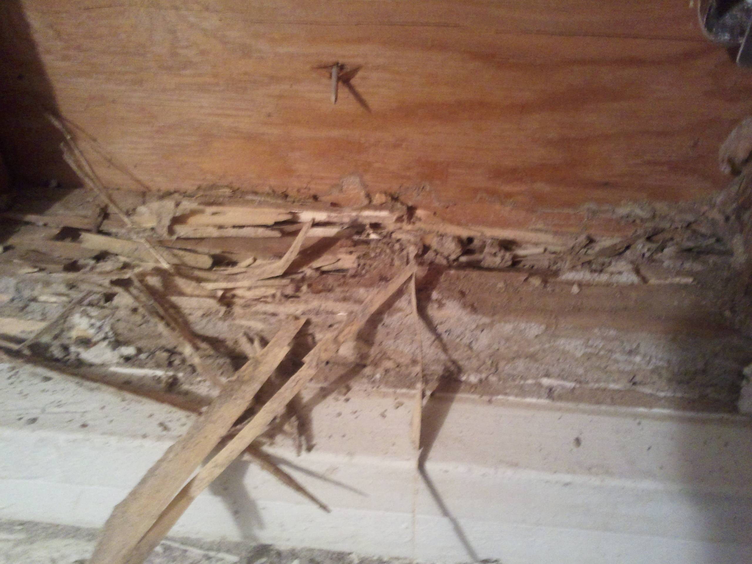 drywall  Is this termite damage and if so how do I repair