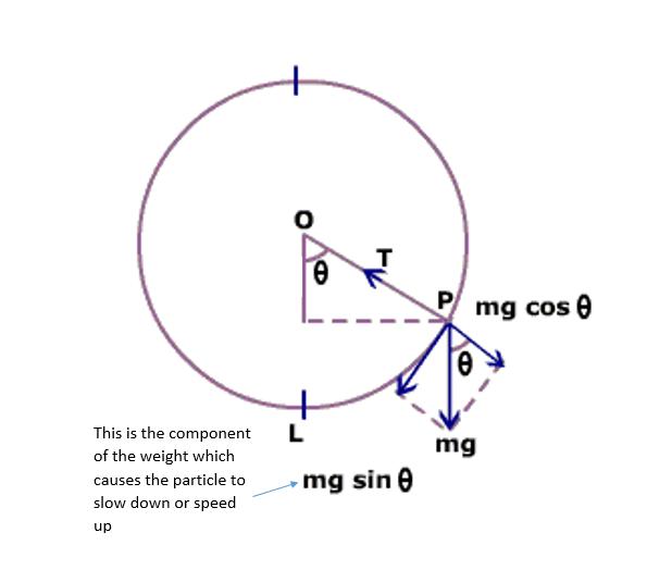 Ferris Wheel Diagram Of Force Newtonian Mechanics Vertical Uniform Circular Motion