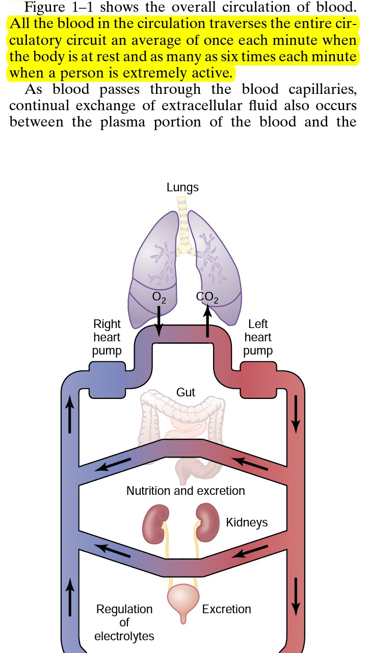 medium resolution of  part in the picture mean that if you take a single blood cell it traverses through all the veins in the circulatory system including all the organs