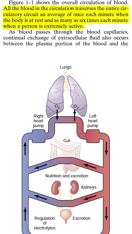 small resolution of  part in the picture mean that if you take a single blood cell it traverses through all the veins in the circulatory system including all the organs