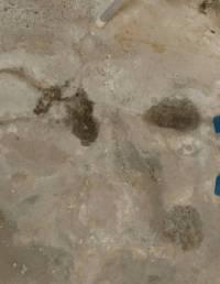 waterproofing - Damp patches in basement floor - Home ...