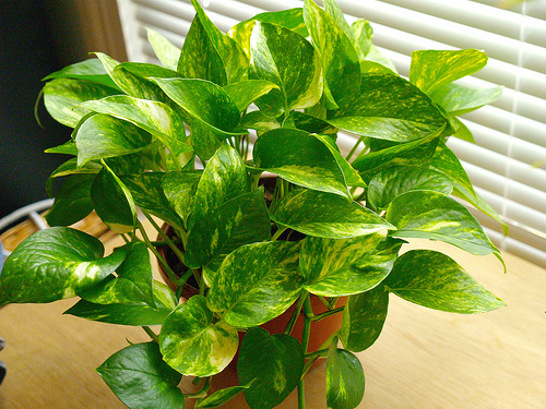 Houseplants What Are Some Low Maintenance Plant Choices