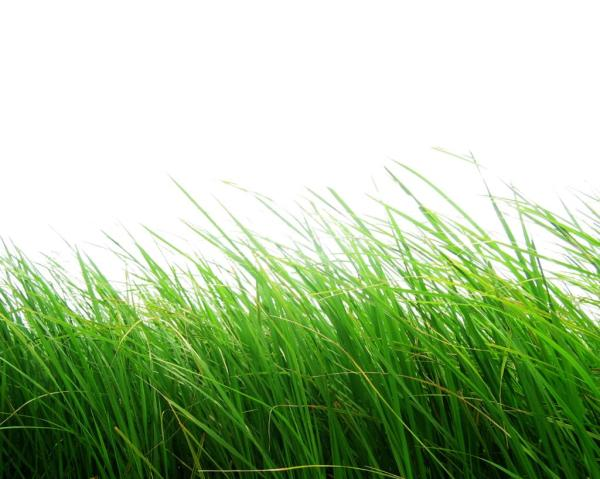 Transparent Grass