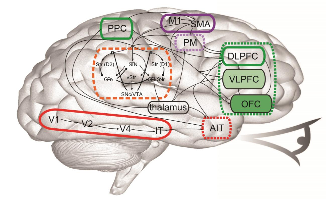 brain model diagram advance mark x dimming ballast wiring cognitive neuroscience flow of how information
