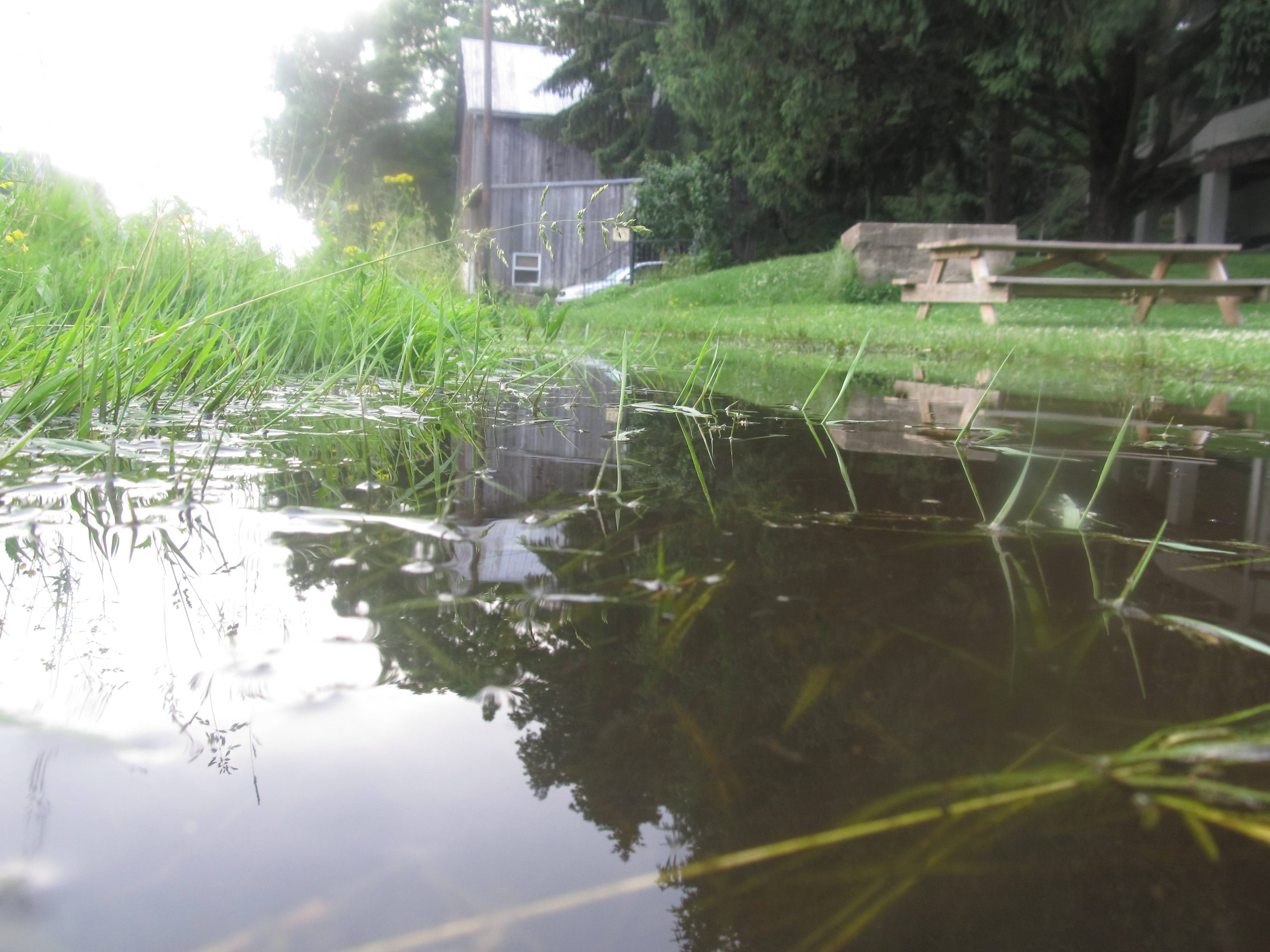 lawn mower wiring diagram of star delta motor starter plant recommendations - what grass types will survive in areas standing water that last for ...