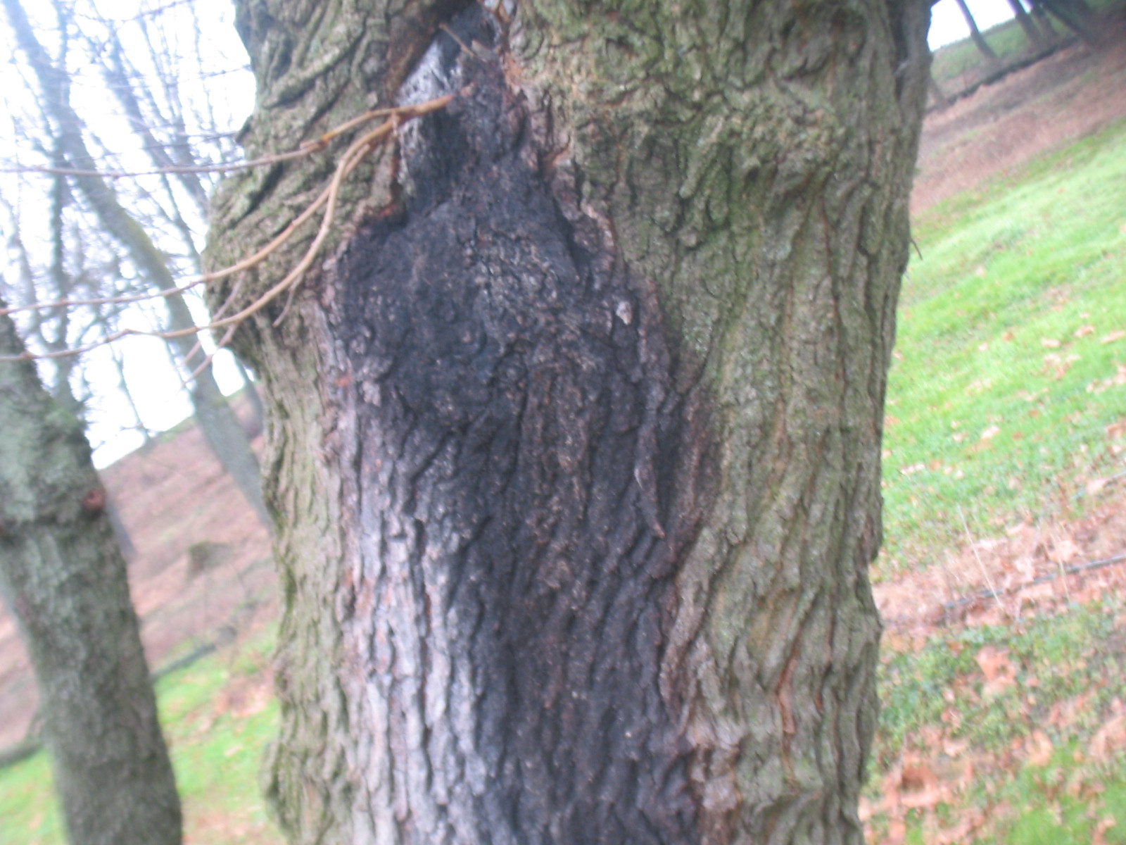 How To Remove Pine Sap From Wood