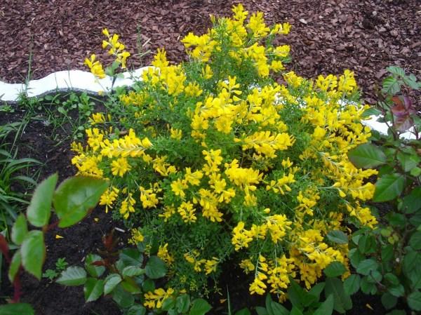 identification - yellow