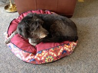 """Waverly Fiesta Medallion Dog Bed - 32"""" Round 5889J - Save 69%"""