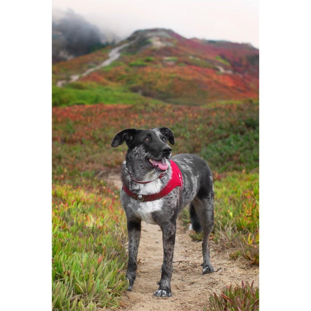 medium resolution of mission wild marina sport mesh dog harness