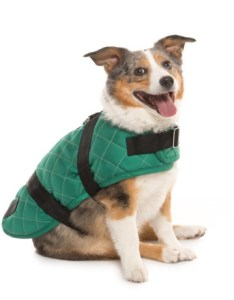 Spot on dog quilted horse blanket coat large in green also save rh sierra