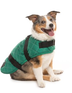 Spot on dog quilted horse blanket coat medium in green also save rh sierratradingpost