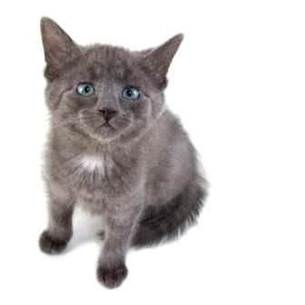 Kedi ve köpeklerde aşı ile önlenebilen hastalıklar