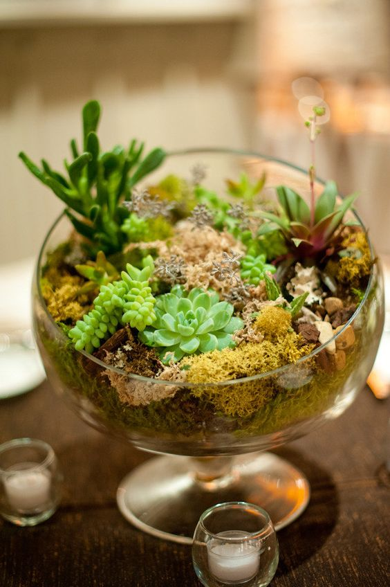 a bowl with moss and succulents is a trendy idea as terrariums are a hot decor idea