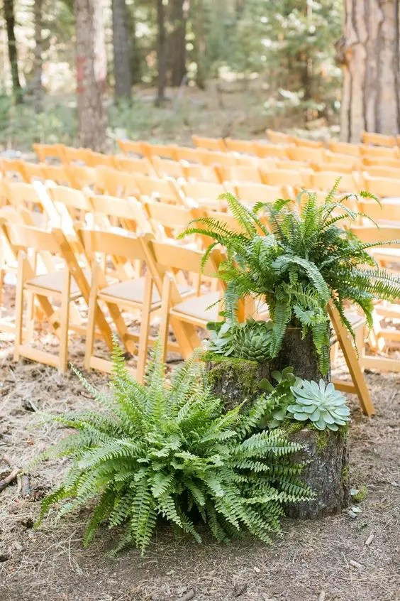 decorate the wedding aisle with lush ferns and large succulents displayed on tree stumps