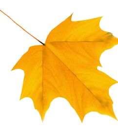 fall leaf png yellow autumn clipart image [ 3977 x 3428 Pixel ]