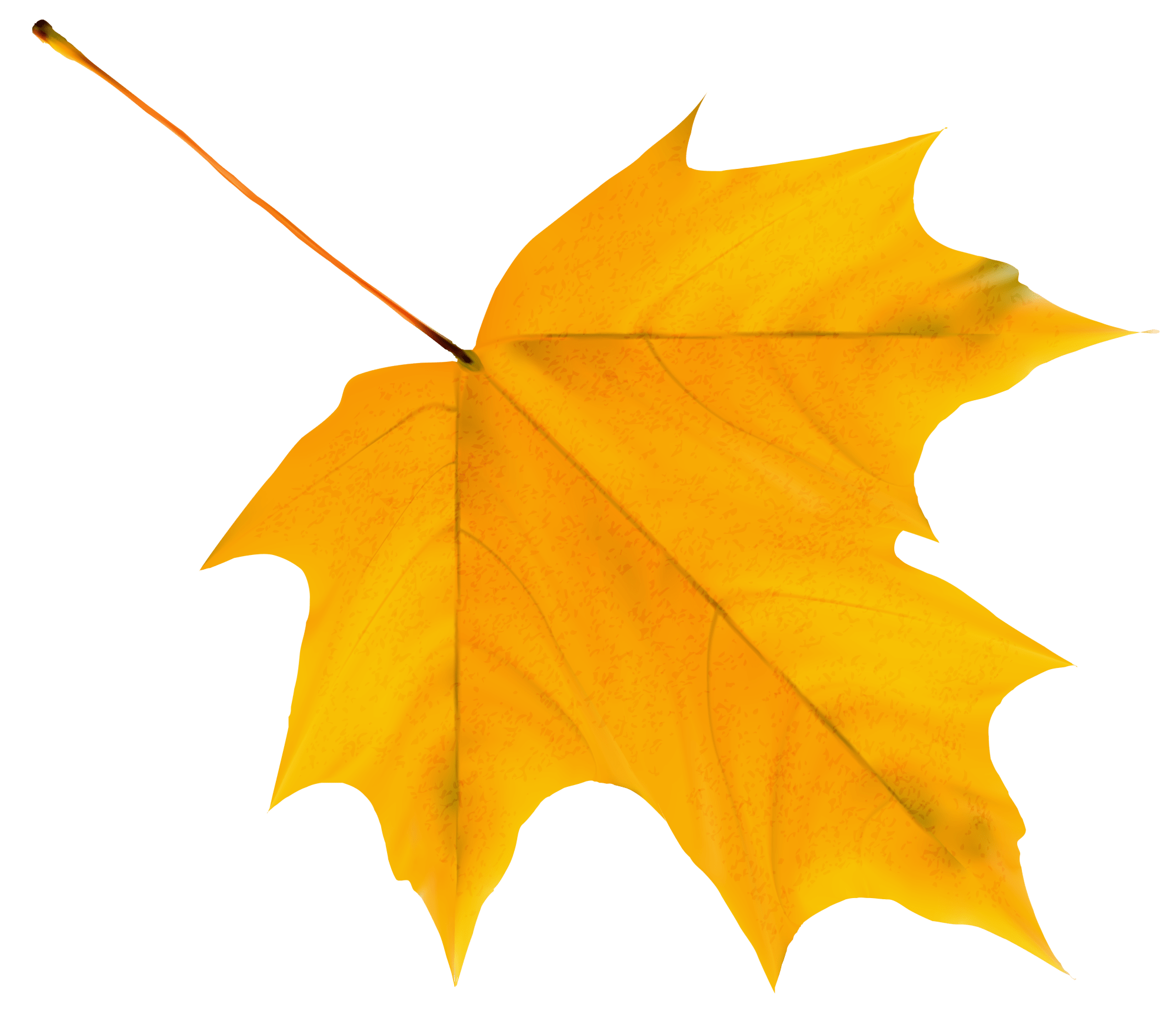 hight resolution of fall leaf png yellow autumn clipart image