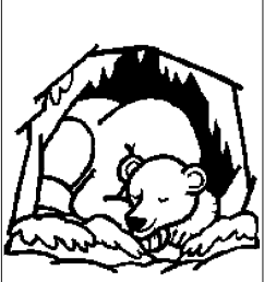 unsurpassed hibernating bear coloring page bears clipart images  [ 800 x 1050 Pixel ]