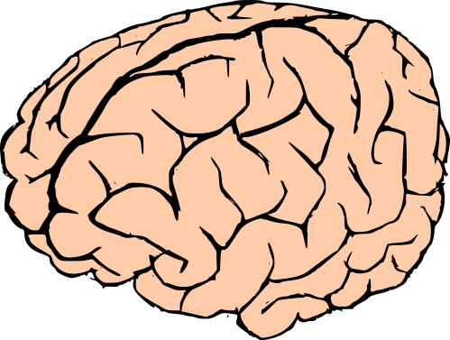 small resolution of brain clipart