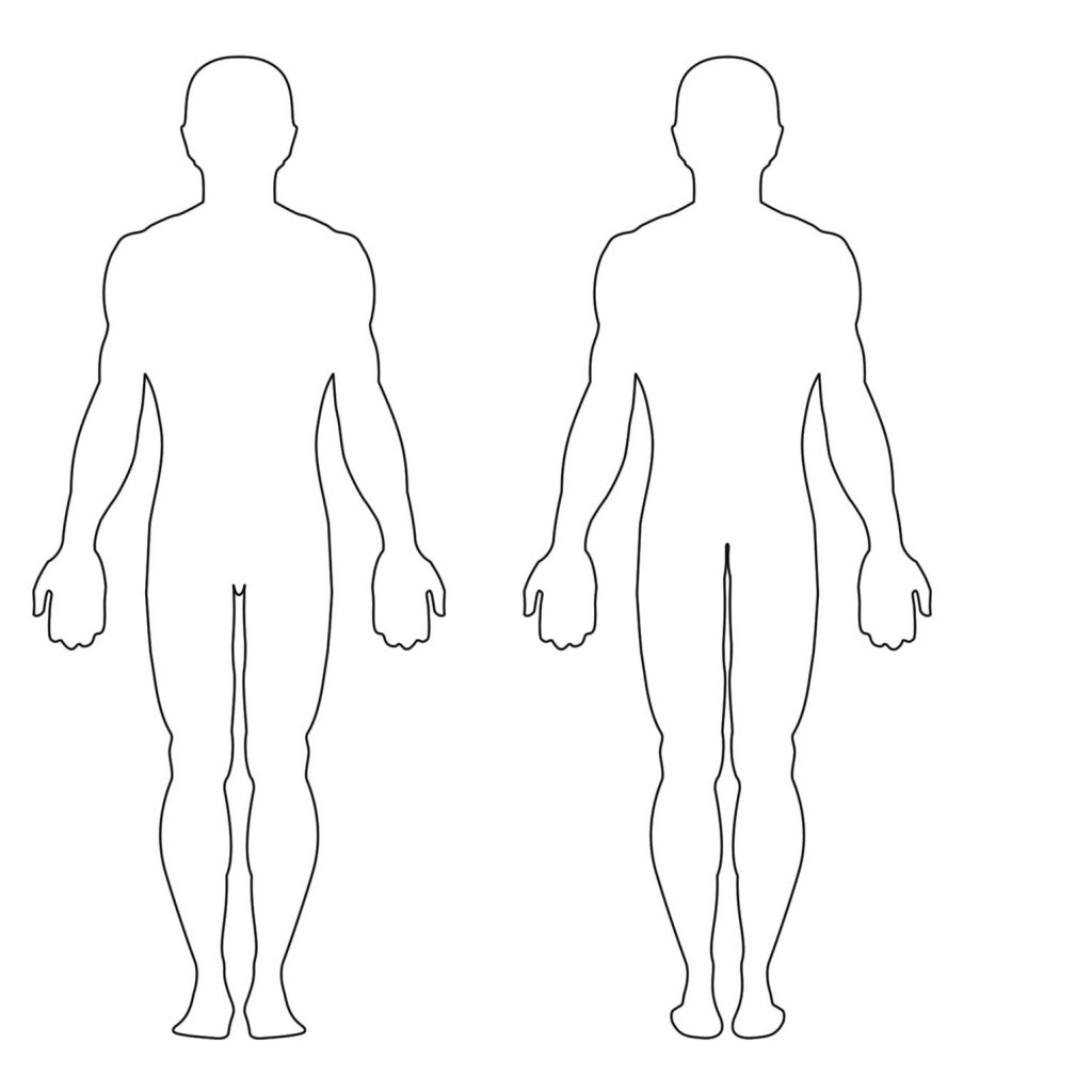 hight resolution of female body diagram front