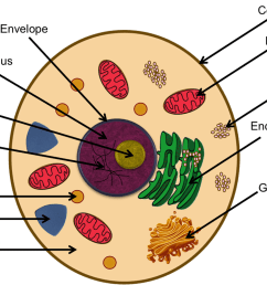 chromatin drawing cytoskeleton cell analogy project [ 1100 x 744 Pixel ]